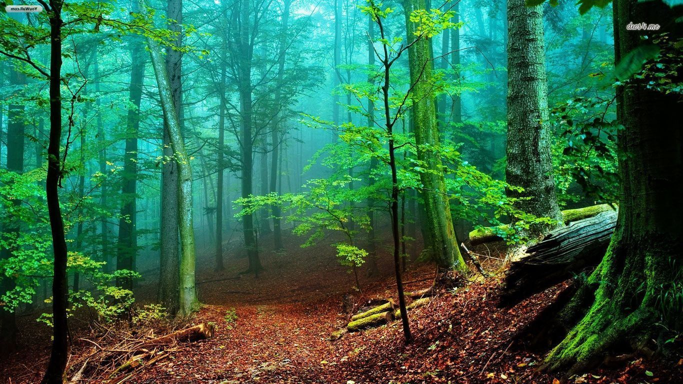 Wallpapers HD Bosques - Partes 21
