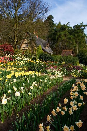 Clare Matthews Garden Blog Free Chive Edging Is Looking: Tulipanes, Narcisos Y Jardines De Primavera