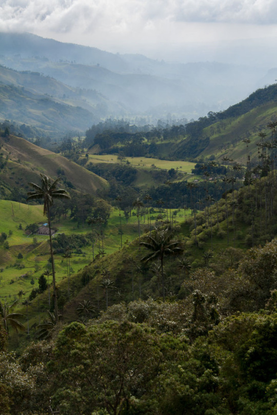 Valle de Cocora - Co...